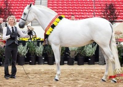 Dueqesa - Champion Jr mare - Vegas