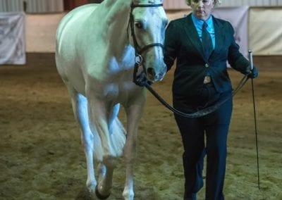 Duquesa 2016 Sport Horse In Hand