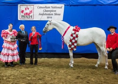 2016 Canadian National Champion Jr Mare - 3 years old