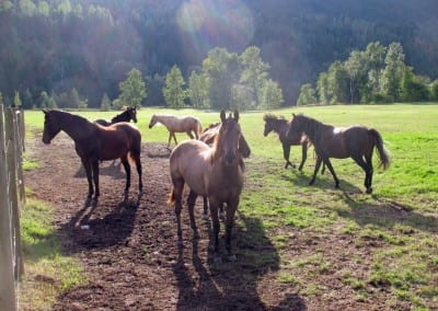 VMF-Estrella-Brillante-pasture