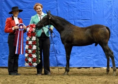 Canadian National Champion colt