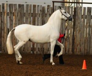 VA Duquesa Sport Horse