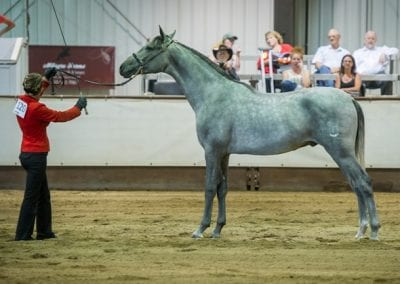 NC Colt, 1 year and under